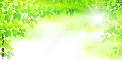 Fotobehang Lime groen 葉 新緑 木 背景