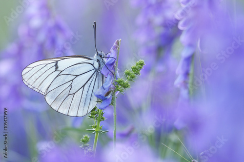 fototapeta na ścianę Mariposa en primavera
