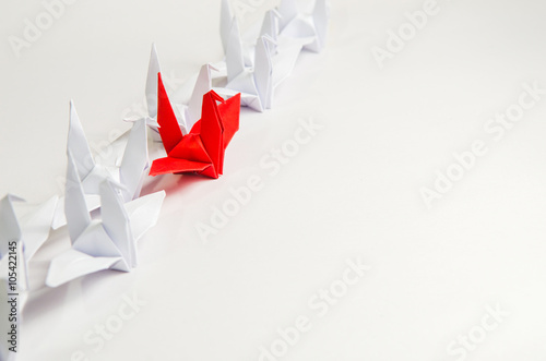 Close up red bird leading among white, Leadership concept, copy space Poster