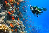 Scuba diver explore a coral reef showing ok sign