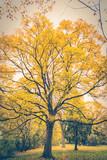 drzewo, park