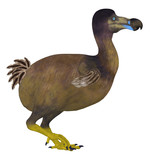 Dodo Bird Side Profile - The Dodo is an extinct flightless bird that lived on Mauritius Island in the Indian Ocean.