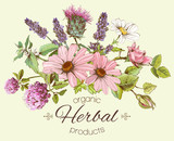 Fototapety Vector vintage hand drawn composition with wild flowers and herbs. Design for cosmetics, store, beauty salon, herbal tea, natural and organic products. Can be used like a greeting card.