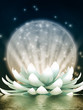 Beautiful  lotus, meditation - 105597148