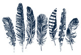 Hand drawn feathers on white background - 105603399