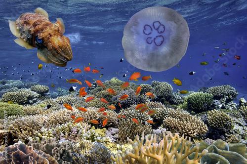 tropikalna-ryba-i-twarde-korale-w-morzu-czerwonym-egyp