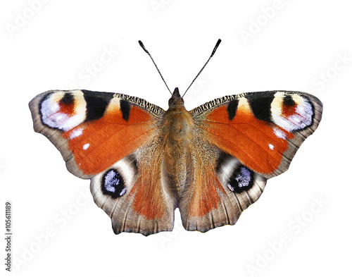 Fotobehang Vlinder large peacock butterfly on white isolated background
