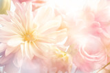 Fototapety Pink peony flower background