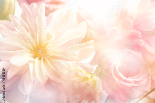 Pink peony flower background Poster