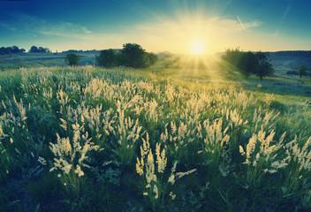 Dolina wysokiej trawy