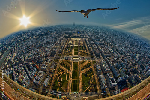 fototapeta na ścianę Seagull flying over Mars Field in Paris, France