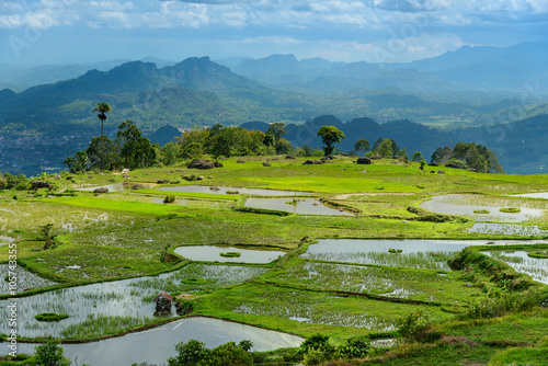 Foto op Aluminium Rijstvelden Green rice field in Tana Toraja
