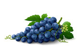 Blue grapes on white background