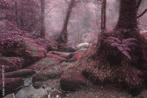 Fototapeta Unusual surreal alternate color forest landscape image