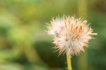 close up shot of fluffy grass flower