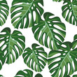 Cotton fabric Monstera palm leaves on the white background. Vector seamless pattern with tropical plant. Tropical jungle foliage.