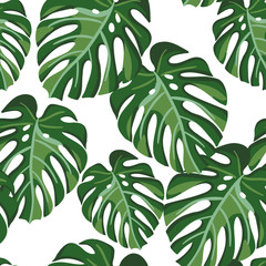Monstera palm leaves on the white background. Vector seamless pattern with tropical plant. Tropical jungle foliage.