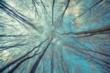 Fototapety Trees Web Background