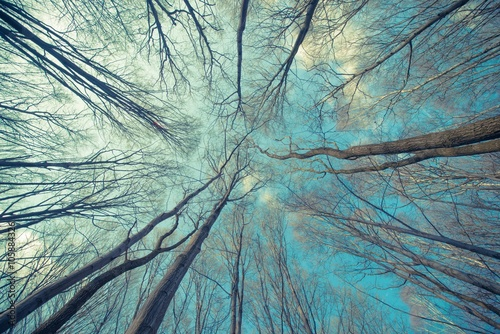 Trees Web Background