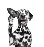 Pies słucha uważnie swojego właściciela