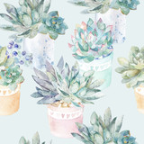 Floral seamless pattern.Succulents in pots.