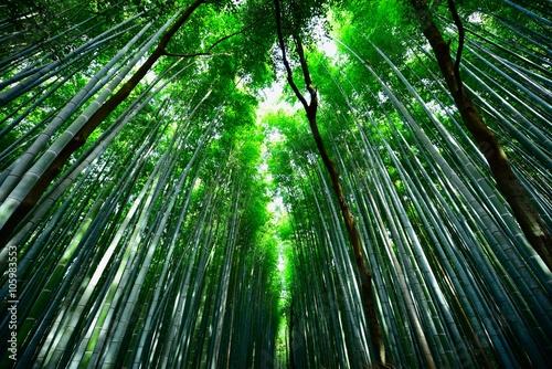 Papiers peints Kyoto 竹林