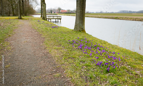 Foto op Plexiglas Landschappen Purple crocuses bloom along the waterfront