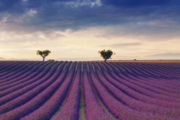 Piękne kolory purpurowe lawendowego pola