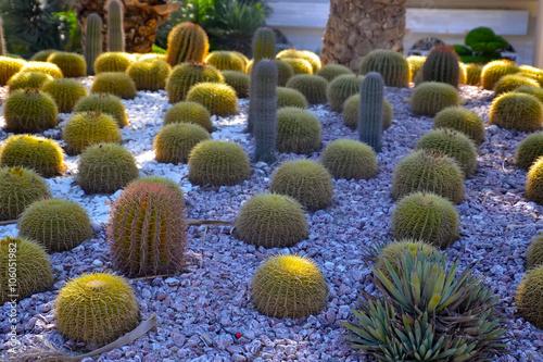 Famille de cactus
