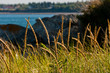 Grass at thebeach