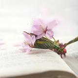 Cherry tree flowers - 106088333