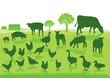Organische Landwirtschaft mit Bauernhof Tiere