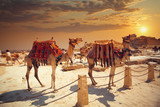 camel near of great pyramid in egypt - 106185320