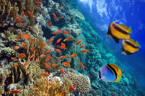 podwodne-sceny-pokazujac-rozne-kolorowe-ryby