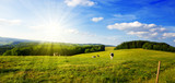 Summer landscape with green grass and cow. - Fine Art prints