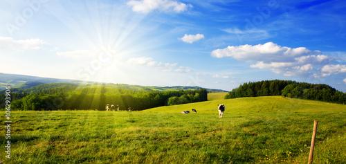 Lato krajobraz z zieloną trawą i krową.