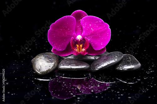 Storczyk i kamienie zen