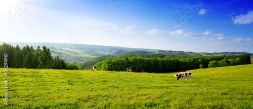 Papiers peints Photos panoramiques Summer landscape with green grass and cow.