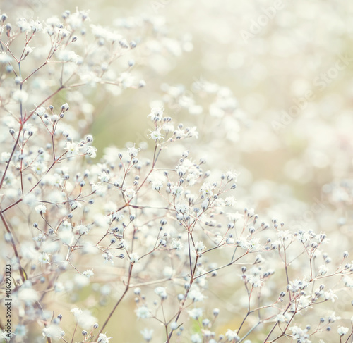 Small white flowers, close up - 106298323