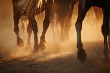 Horse's legs