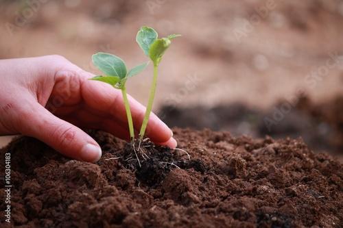 Zdjęcia na płótnie, fototapety, obrazy : Plant plants