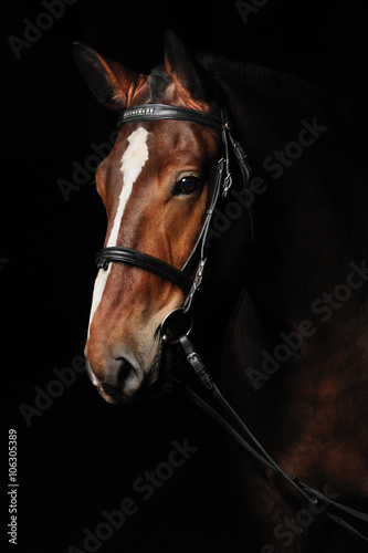 Plakat Portrait of a bay horse