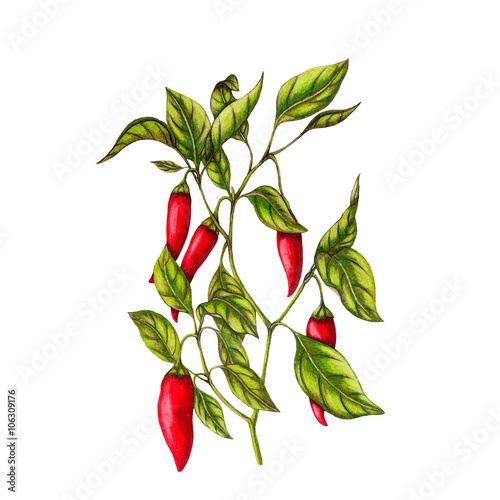Chili pepper Plakát