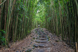Fototapeta Bambus - Pipiwai Trail Stone Path in Haleakala National Park © Rocky Grimes