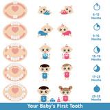 Fototapety Baby teething chart