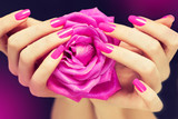 Fototapety Elegant female hands with pink manicure on the nails . Beautiful fingers holding a rose .