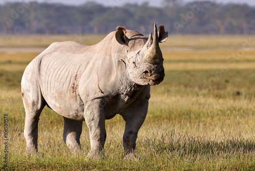 Aluminium Neushoorn Beautiful black rhino