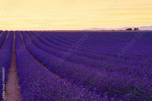 Foto op Canvas Violet Beautiful colors purple lavender fields near Valensole, Provence