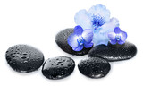 Blue Flower orchid and black wet stones. Spa concept.