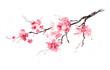 Sakura branch. Original watercolor painting.